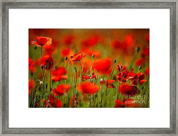 Red Poppy Flowers 02 Framed Print