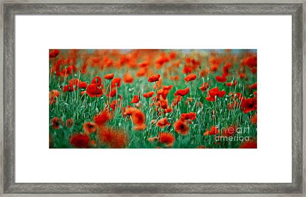 Red Poppy Flowers 04 Framed Print