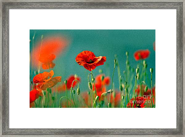 Red Poppy Flowers 06 Framed Print