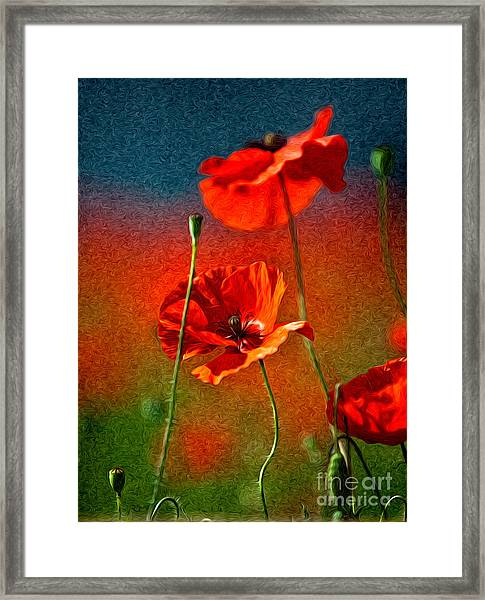 Red Poppy Flowers 08 Framed Print