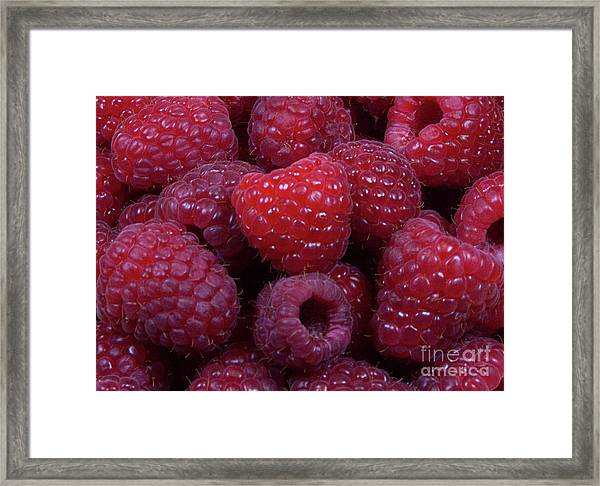 Red Raspberries Framed Print