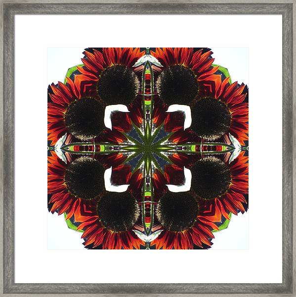 Red Sunflowers Framed Print