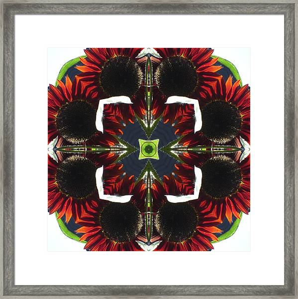 Red Sunflowers With Blue Center Framed Print