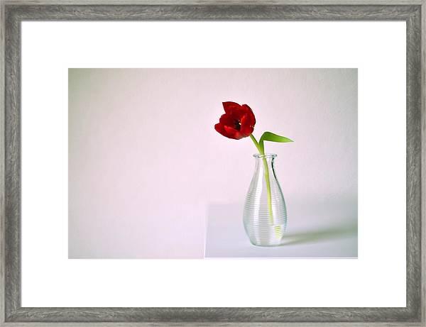 Red Tulip In Glass Vase Framed Print