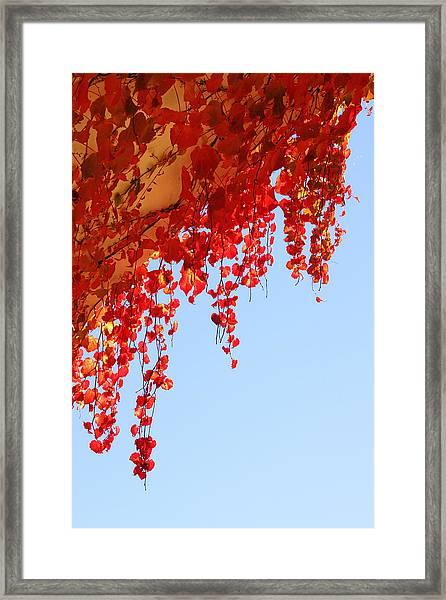 Red Vine Framed Print