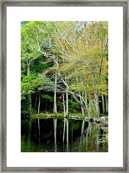 Reflections On A Fall Day Framed Print