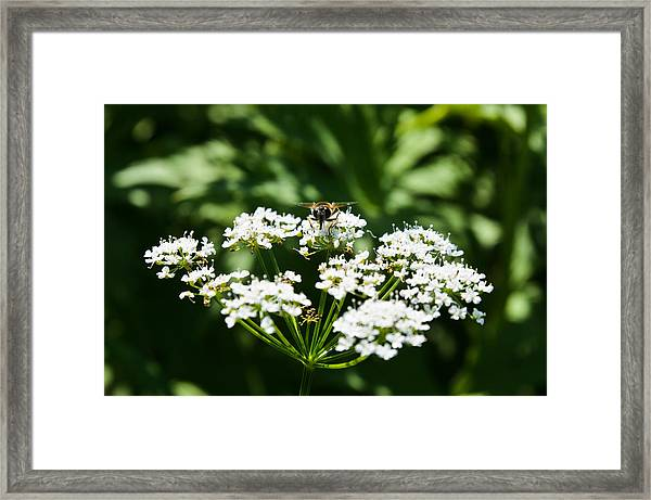 Refractions Framed Print