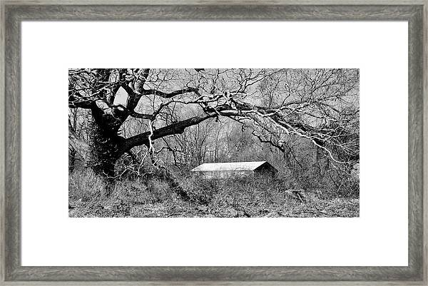 Relax Under My Tree Framed Print