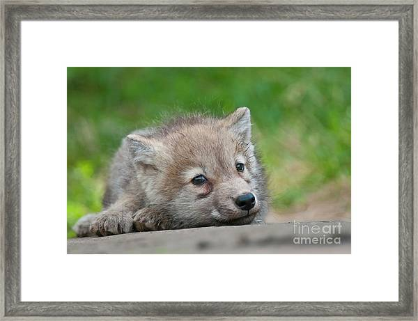 Resting Pup Framed Print
