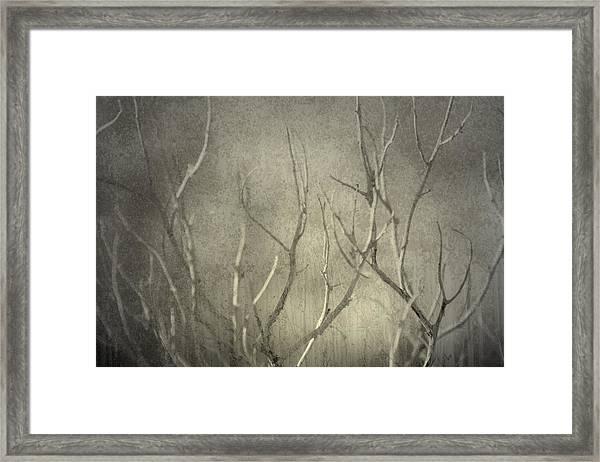 Reticent Framed Print