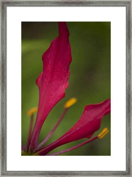 Rich Petals Framed Print