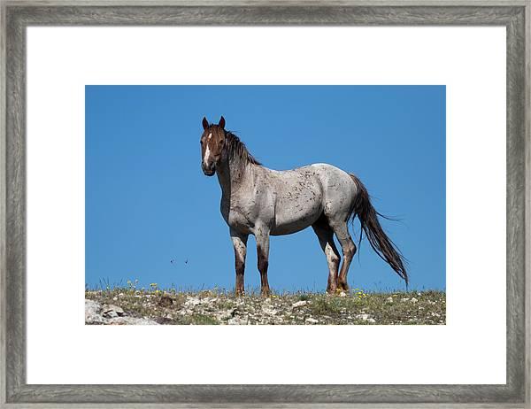 Ridgetop Mustang Framed Print