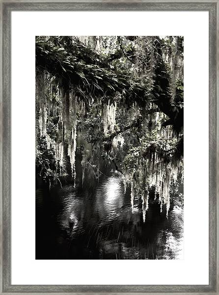 River Branch Framed Print