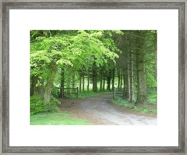 Road Into The Woods Framed Print
