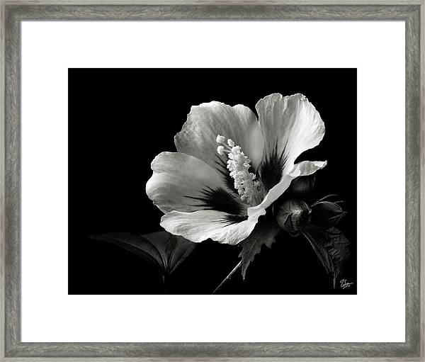 Rose Of Sharon In Black And White Framed Print