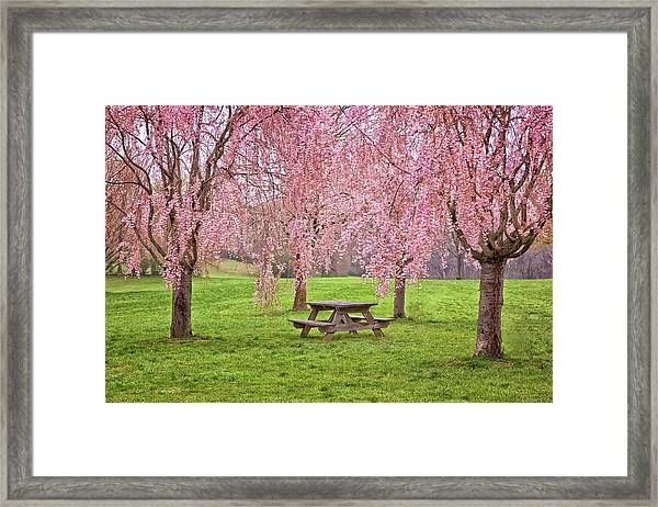 Rose Tree Table Framed Print