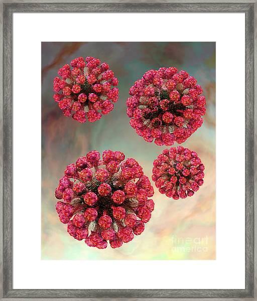 Rubella Virus Particles Framed Print