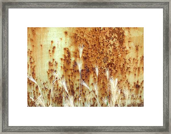Rusty Abstraction Framed Print by Valia Bradshaw