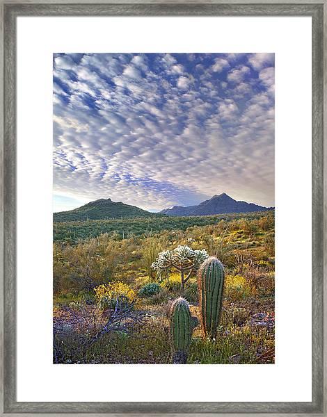 Saguaro Carnegiea Gigantea Framed Print