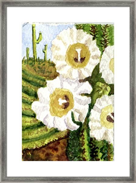 Saguaro Spring Framed Print
