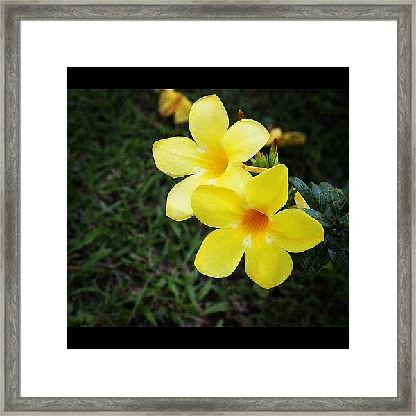 Same Previous Flower From A Different Framed Print