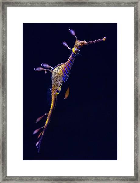 Seadragon  Framed Print by Donna Pagakis