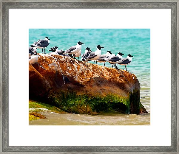 Seagull Cliff Framed Print