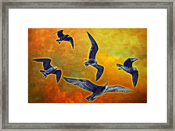 Seagulls In Flight Framed Print by Donna Pagakis