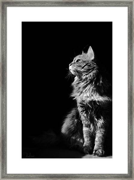 Searching The Sun Framed Print