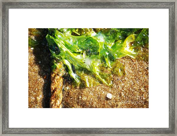 Seaweed And Rope Framed Print by HD Connelly