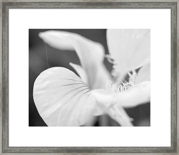 Secret Life Framed Print