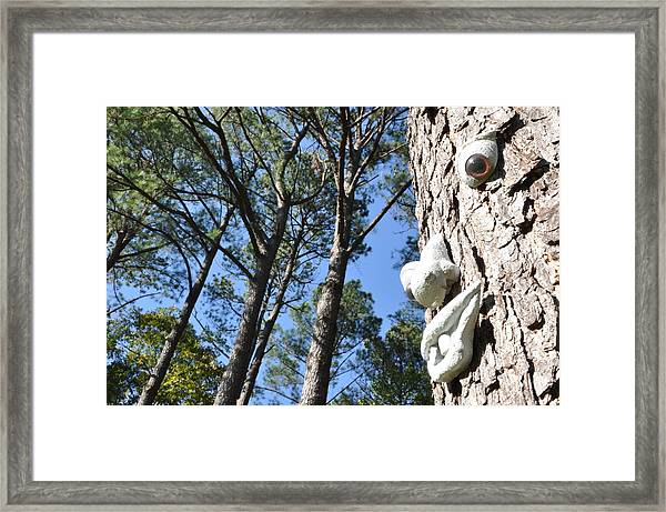 See Da Tree Framed Print