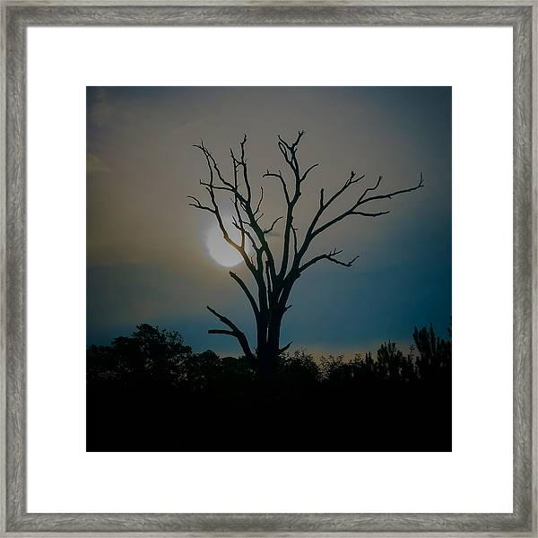 Sentinal At Sunrise Framed Print