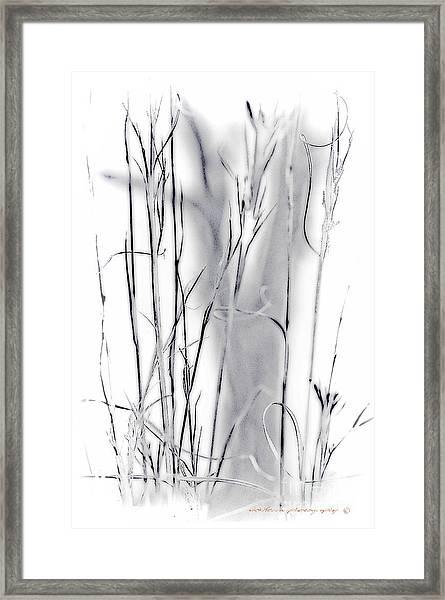 Sentinel Shadow Framed Print