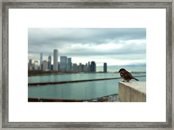 Serenity Of Chicago Framed Print