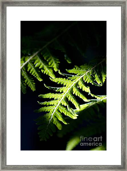 Shadow On Leaf -7 Framed Print