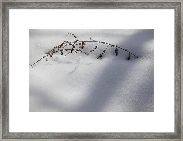 Shadow On Snow 2 Framed Print
