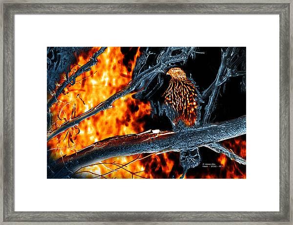 Sharp Shinned Hawk 0112 Fire And Ice Art Framed Print