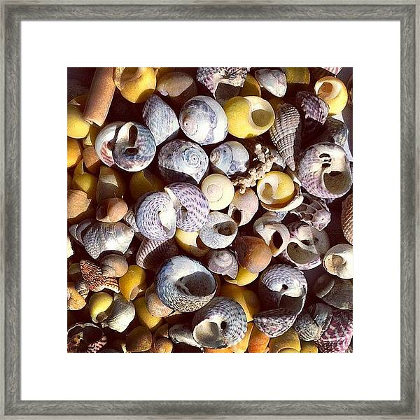 Shells From Brittany Framed Print