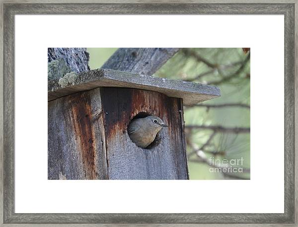 She's Home Framed Print