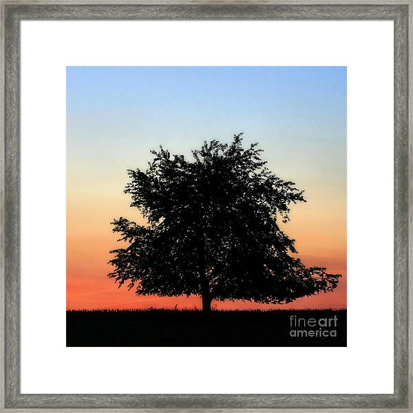 Make People Happy  Square Photograph Of Tree Silhouette Against A Colorful Summer Sky Framed Print