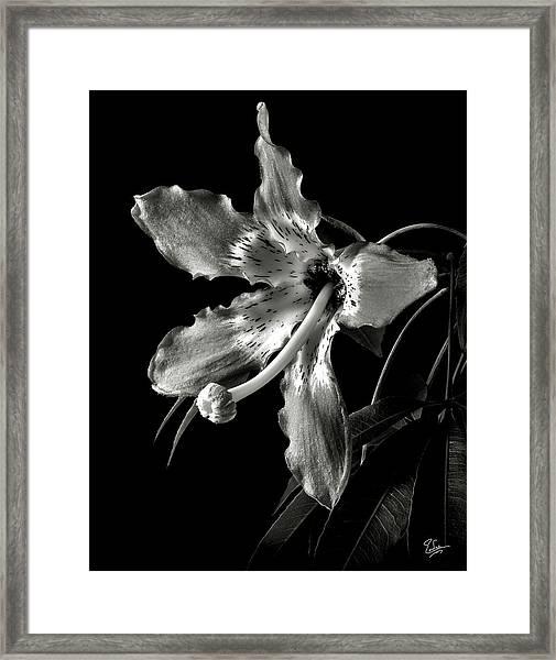 Silk Flower In Black And White Framed Print