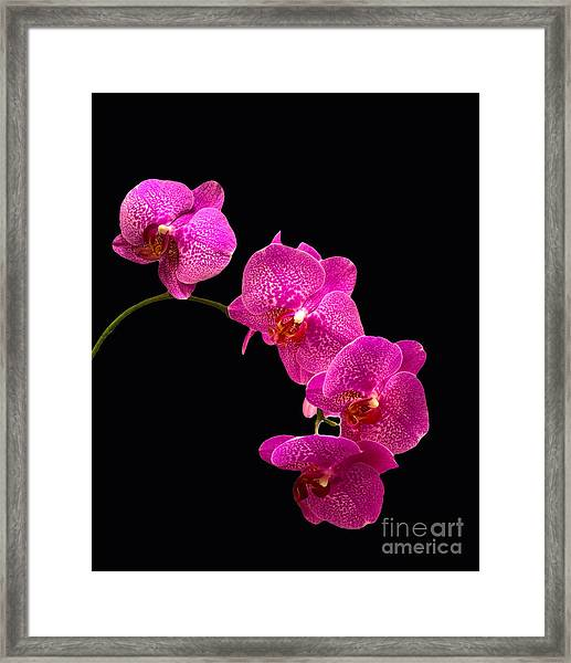 Simply Beautiful Purple Orchids Framed Print