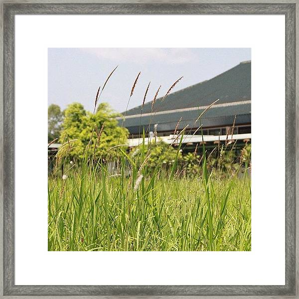 Simply Grass Under The Focus Of The Framed Print