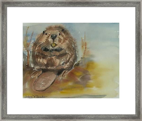 Sitting Beaver Framed Print by Barbara McGeachen