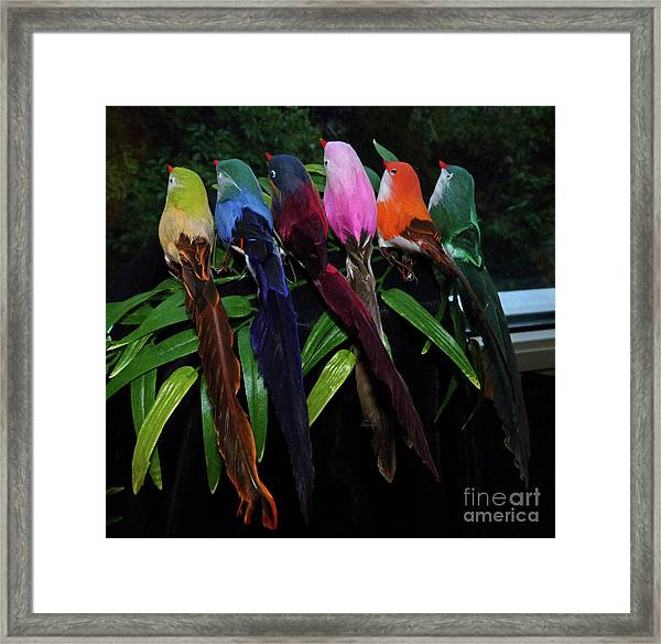 Six Long-tailed Colorful Birds On A Bamboo Leaf Framed Print