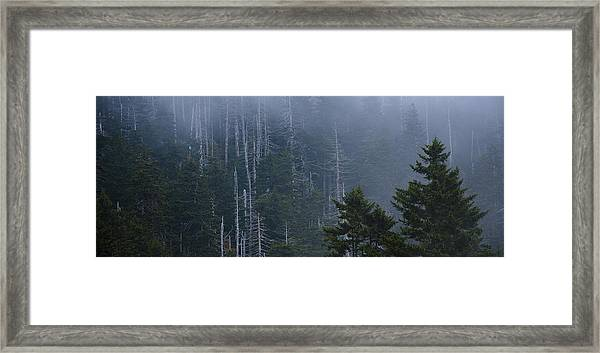 Skeletons In The Mist Framed Print