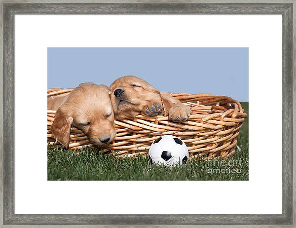 Sleeping Puppies In Basket And Toy Ball Framed Print
