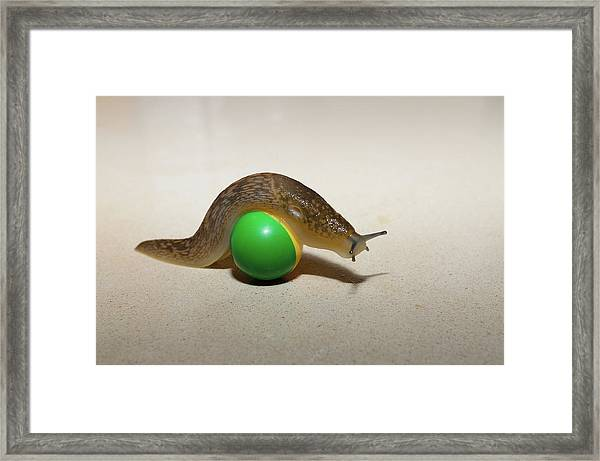 Slug On The Ball Framed Print
