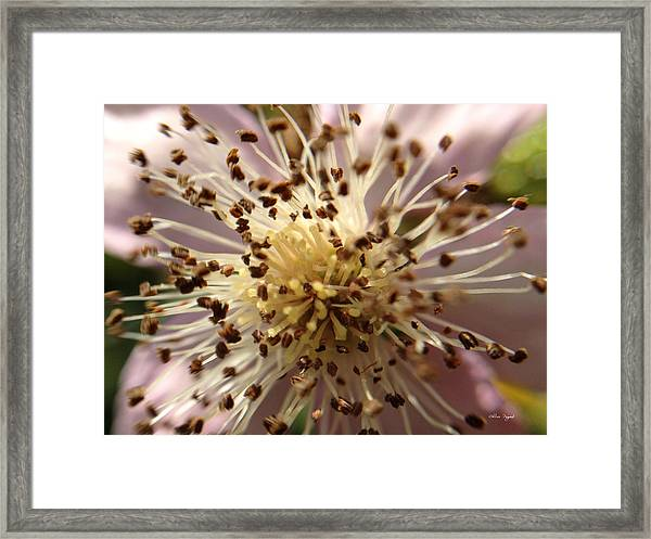 Small Seeds Framed Print